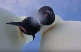 Emperor penguins take #selfie in Antarctica