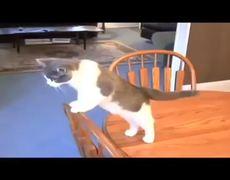 Im a Stupid Cat Viral Music Video