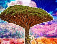 Socotra, a Prehistoric Island