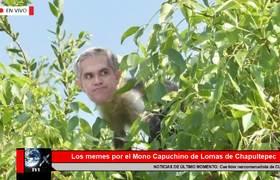 Los memes por el Mono Capuchino de Lomas de Chapultepec