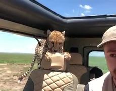 #VIRAL: Man survives close encounter with cheetah during safari