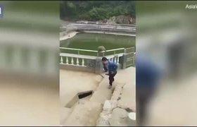 Empuja mono al agua y recibe su merecido en segundos