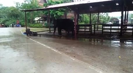 #VIRAL: Baby Elephant Loves The Rain - Video