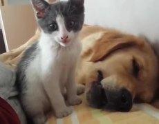 #VIRAL: Kitten Plays, Dog Sleeps: A Lovestory