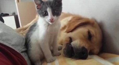 #VIRAL: Kitten Plays, Dog Sleeps: A Lovestory