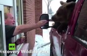 Sancionan a un zoo por llevar a un oso a tomar helado