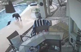 #VIRAL: Hero Dog Saves Dog From Drowning