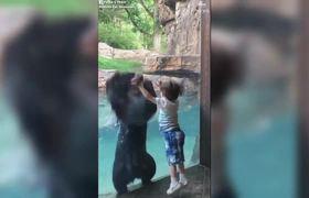 Bear and boy jump for joy