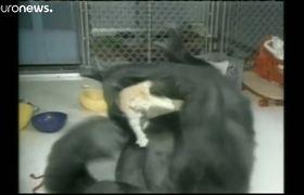 #Koko the 'talking' gorilla dies