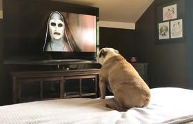Bulldogs Reaction to The NUN Trailer