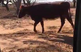 Vac hce el #KikiChllenge