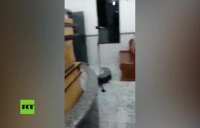'Plaga bíblica' de hormigas en una iglesia de Perú