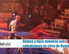 Tigre sufre convulsiones en circo y entrenador lo golpea para siga el show