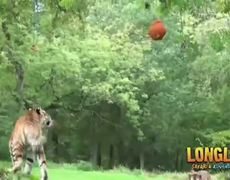 Safari park animals celebrate Halloween