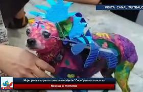 Mujer pinta a su perro como un alebrije de '#Coco' para un concurso