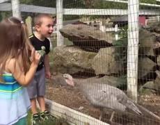 Kids vs Turkeys