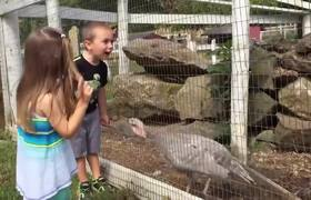 Kids vs Turkeys