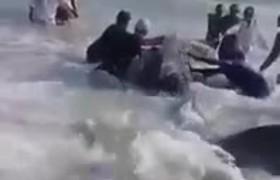 Good Samaritans rescue beached Shark in Oman