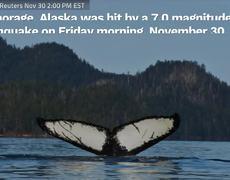 Sismo de 7 grados sacude a Alaska