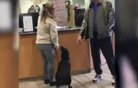 Jumping dog excited to see veterinarian