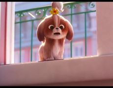 THE SECRET LIFE OF PETS 2 - Official Movie Teaser Trailer #4 - Daisy (2019) Tiffany Haddish Animated Movie