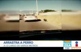 Mujer amarra a perro a la cajuela de su auto y lo arrastra por varios metros en Oaxaca