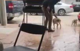 #VIRAL: Desgraciado acuchilla a perro en Piedras Negras