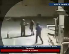 Perro defiende de ladrones a un despachador de gasolina en Ciudad Madero, Tamaulipas