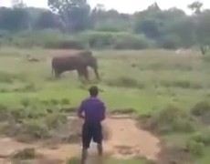 #VIRAL: Elephant tramples and kills to try to hypnotize him