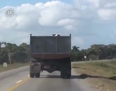 pig leaps from a moving truck to save his life