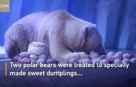 #Polarbears enjoy Lantern Festival treat at Shanghai zoo
