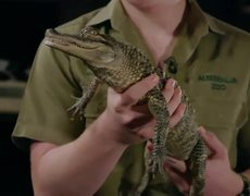 The Tonight Show: Jimmy en confrontación Steve Irwin antes del segmento de Animales