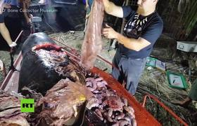 #VIDEO: 88lb of plastic removed from young whale's stomach during autopsy