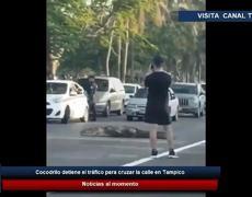 Cocodrilo detiene el tráfico para cruzar la calle en Tampico