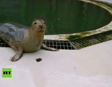 Enseñan a focas a 'cantar' una canción de Star Wars
