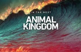 Animal Kingdom 4x06 Promo
