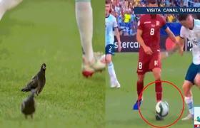 Paloma se mete en el Maracaná y le comete falta a Rodrigo De Paul en el Argentina vs Venezuela
