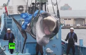 Japan resumes whale-hunting after 30-year ban