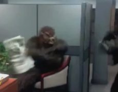 Werewolf Office Scare
