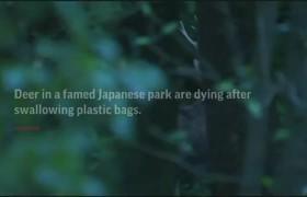 9 deer at famed Japan park die after eating plastic bags