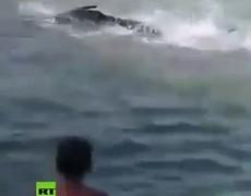 Bañistas apedrean hasta la muerte a un pez espada en una playa de Grecia