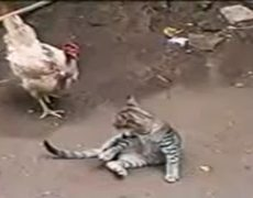 The Fight of the Century Kid Pussycat vs Gallina Fina