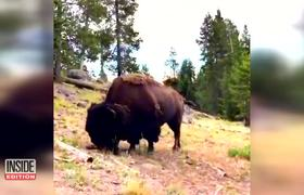 Bison Sends 9-Year-Old Girl Flying Through Air