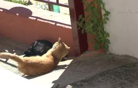 Cats making love breeding