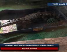 Fotos de cocodrilos encerrados en vitrinas indigna redes en Chihuahua