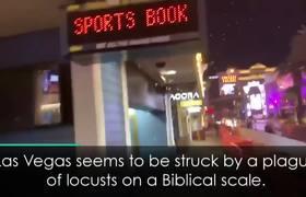 Las Vegas Struck by Locust Invasion