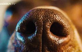 La razón por qué los perros huelen las partes íntimas de las personas