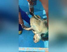 #VIRAL: Pescador rescata a tortuga atrapada en una red de pesca