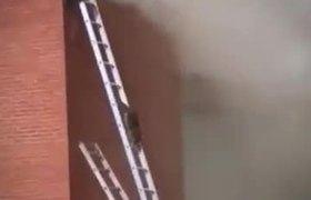 Bomberos colocan escaleras para que mapaches escapen de un incendio