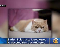 Desarrrollan vacuna contra la alergia a los gatos